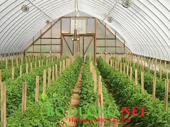 quy trình trồng cây đậu đen tại công ty