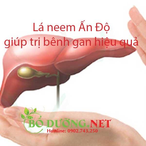 Lá neem trị bệnh gan